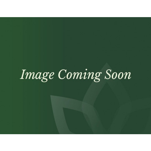 Nova - Oxley 2 Seat Rattan Sofa Set - Brown