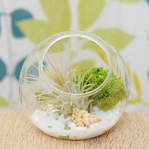 Glass Orb Vase Beach Themed Air Plant Terrarium