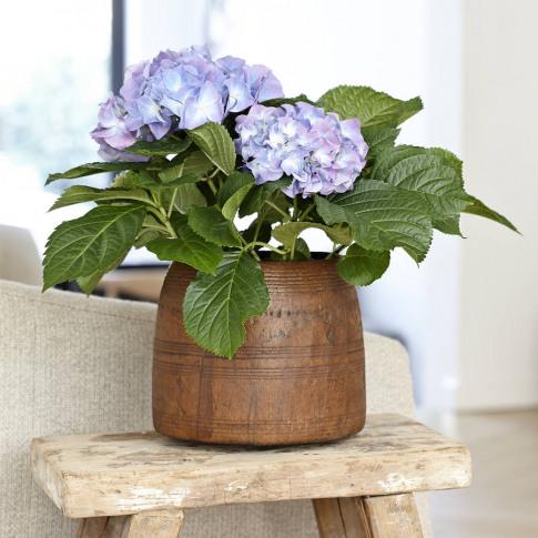 Antique Wooden Plant Pot